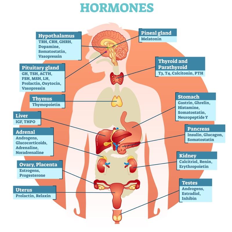 Quali sono gli ormoni bioidentici