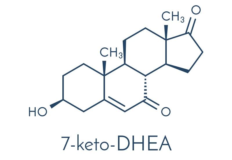 Il 7-KETO DHEA: lo stimolatore del sistema immunitario e del metabolismo